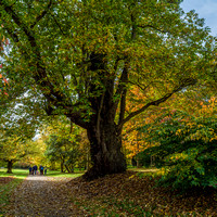 Petworth-20151025-004