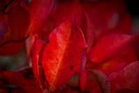 Colours of the autumn