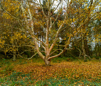 Winkworth-20151026-002